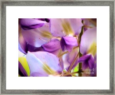 Framed Print featuring the photograph Wisteria Kisses by Roxy Riou