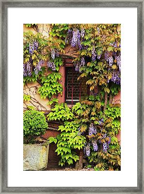 Wisteria On A Home In Zellenberg France 3 Framed Print by Greg Matchick