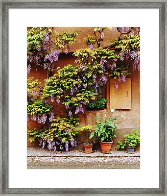 Wisteria On Home In Zellenberg 4 Framed Print