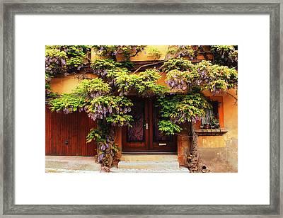 Wisteria On Home In Zellenberg France 2 Framed Print