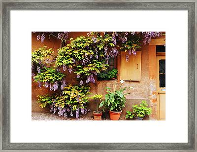 Wisteria On Home In Zellenberg France Framed Print