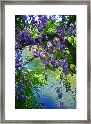 Wisteria Over Turtle Creek Framed Print