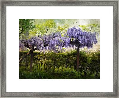 Wisteria Trellis Framed Print by Jessica Jenney