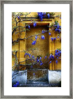 Wisteria Wall Framed Print