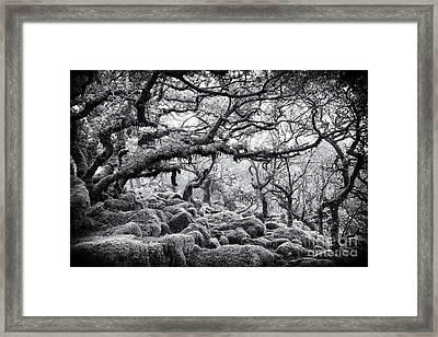 Wistmans Wood Dartmoor Devon  Framed Print