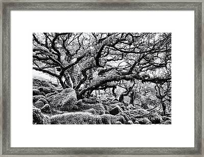 Wistmans Wood  Framed Print by Tim Gainey