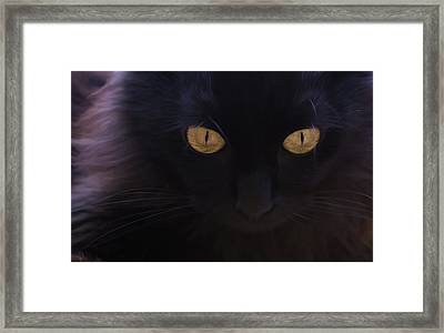 Witchery Framed Print by Hazel Billingsley