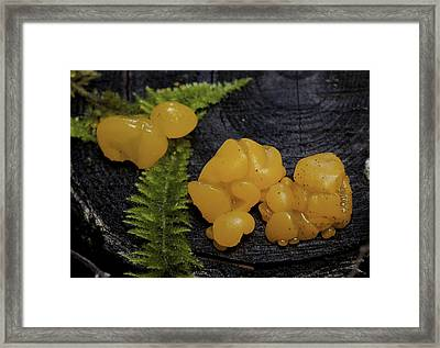 Framed Print featuring the photograph Witches Butter by Betty Depee