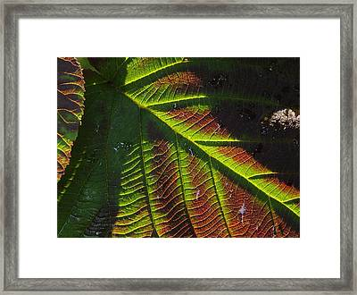 Witchhobble Leaf Detail Framed Print