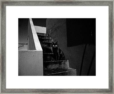 Witch's Cat In Moonlight... Framed Print by Salman Ravish