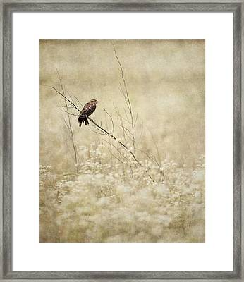 With A Bite-size Snack Framed Print by Dale Kincaid