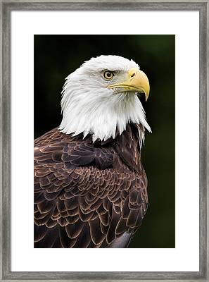 With Dignity Framed Print