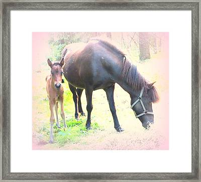 A Newborn Little Filly With Her Mum Framed Print