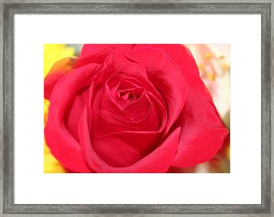 Framed Print featuring the photograph With Love by Judy Palkimas