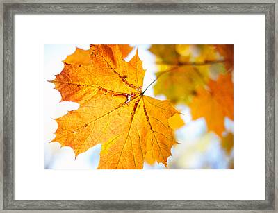With No Perfection. Autumnal Aquarel Framed Print
