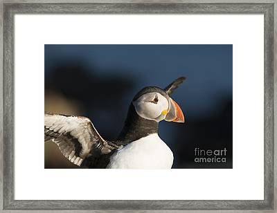 With Outstretched Wings Framed Print by Anne Gilbert