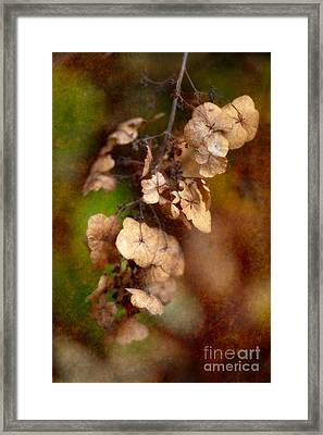 With The Passing Of Time Framed Print by Venetta Archer