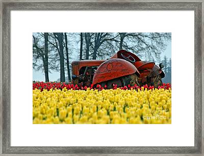 With Toil Comes Beauty Framed Print