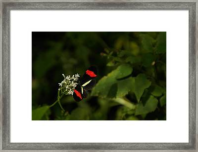 With Wings Spread Framed Print