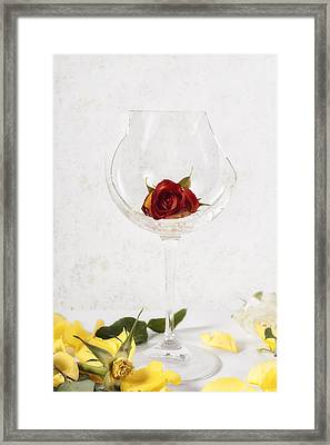 Withered Red Rose Framed Print