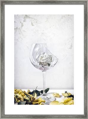 Withered White Rose Framed Print