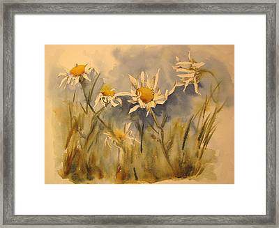 Withering Daisy's Framed Print by Ramona Kraemer-Dobson
