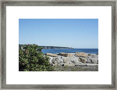 Withering Sea Roses Framed Print