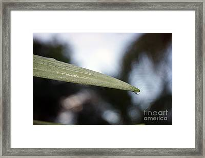 Within A Raindrop Framed Print