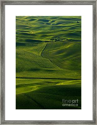 Within A Sea Of  Green Framed Print by Mike  Dawson