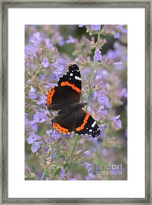 Within Lavender Framed Print by Tim Good