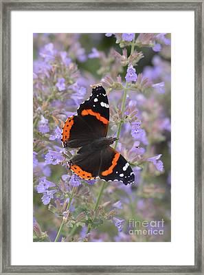 Within Lavender Framed Print