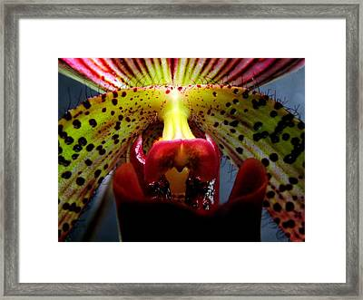 Within The Lady Slipper Framed Print by Karen Wiles