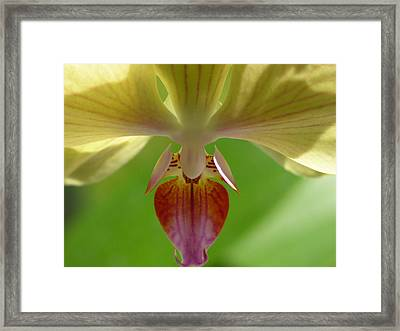 Within The Moment Framed Print by Lucy Howard