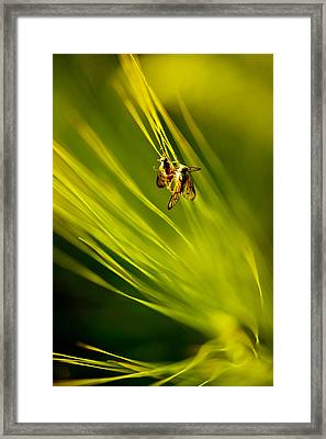 Withstand In Turbulence Framed Print by Mah FineArt