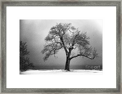 Withstanding Framed Print by Betty LaRue