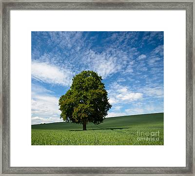 Witness Of Time Framed Print by OUAP Photography