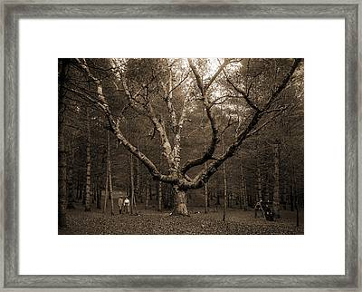 Wizard Tree, Cathedral Woods, North Conway, White Framed Print by Litz Collection