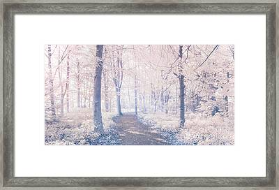 Wodland Walk Framed Print