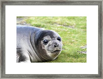 Woeful Weaner Framed Print