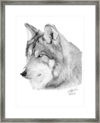 Wolf - 006 Framed Print by Abbey Noelle