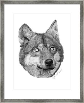 Wolf - 017 Framed Print by Abbey Noelle