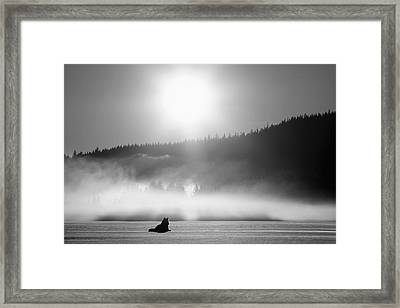 Wolf Basking In Sunlight Near Juneau Framed Print by John Hyde