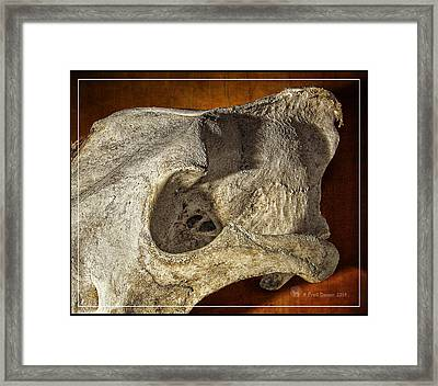 Wolf Bone Framed Print
