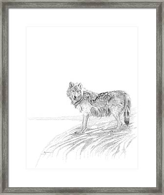 Wolf Framed Print by Carl Genovese