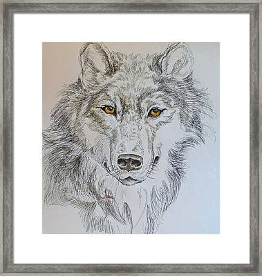 Wolf Eyes  Framed Print