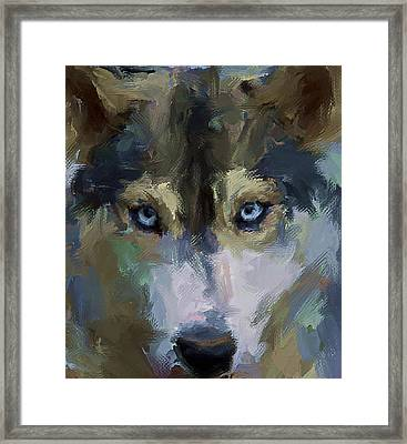 Wolf Eyes Framed Print by Yury Malkov