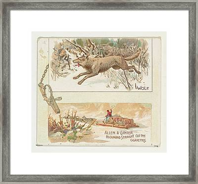 Wolf, From Quadrupeds Series N41 Framed Print