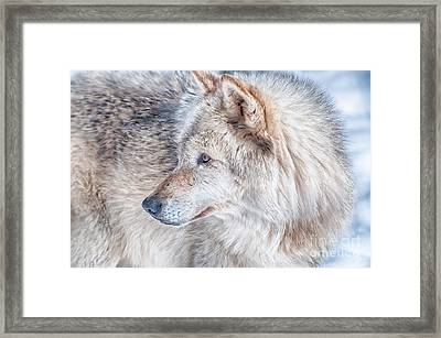 Wolf In Disguise Framed Print