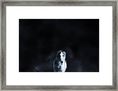 Wolf Like Sight Hound Framed Print by Christian Lagereek