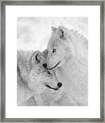 Wolf Love Black And White Framed Print